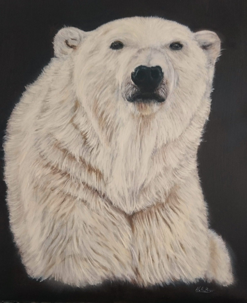A photo of 'Polar Bear ' by Neil Prior