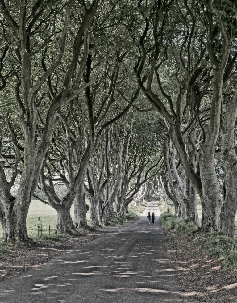 A photo of 'Dark Hedges' by R. Dallywater