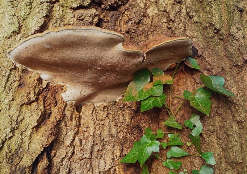 A photo of 'Peace Fungi' by R Dallywater