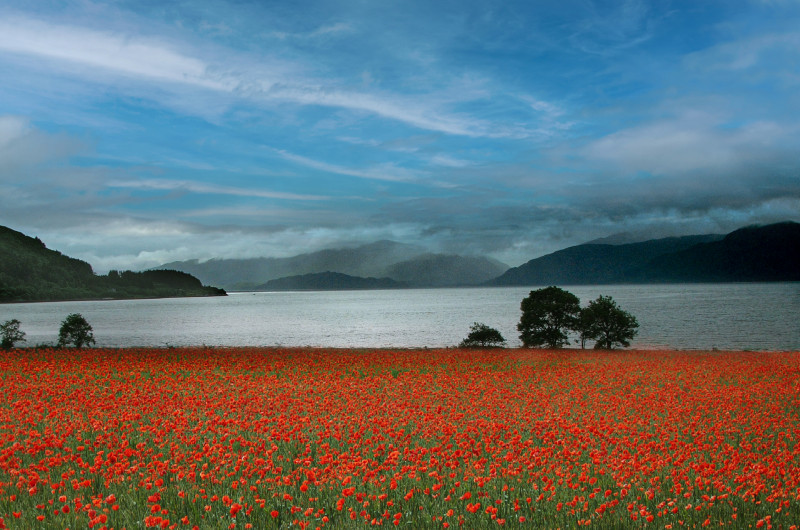A photo of 'Poppy Field by the Loch' by D Gallimore