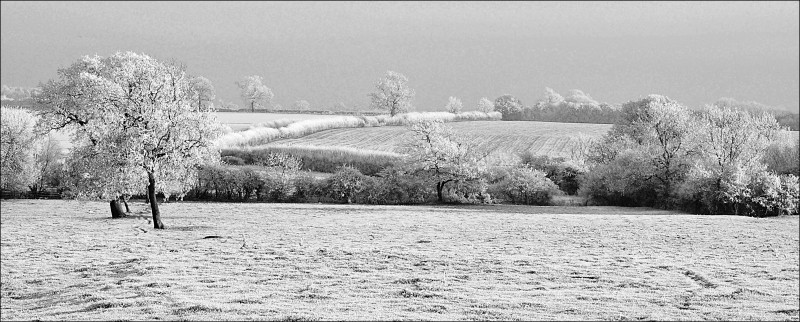 A photo of 'Haw Frost' by R. Jacques