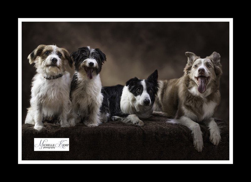 A photo of 'Dog Portraits' by Michelle Kemp Photography