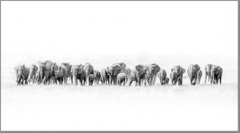 A photo of 'Mid Day Herd' by Phil Mallin