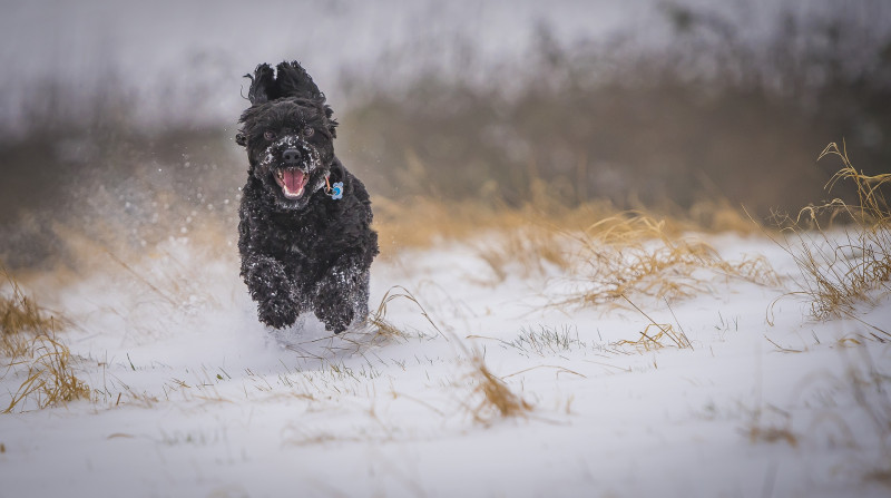 A photo of 'Snow Chase' by James Botterill