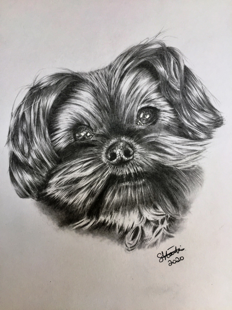 A photo of 'Dog Portrait  Yorkshire Terrier ' by Samantha Haskins